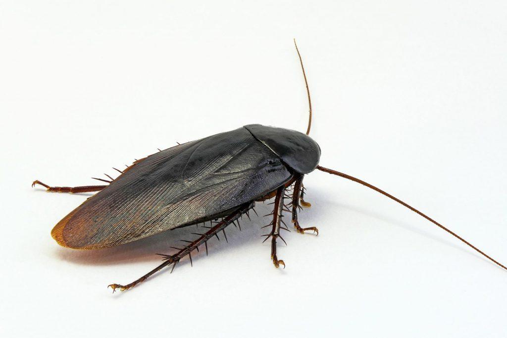 掃除機でゴキブリを吸い取った後はどうすればいい?